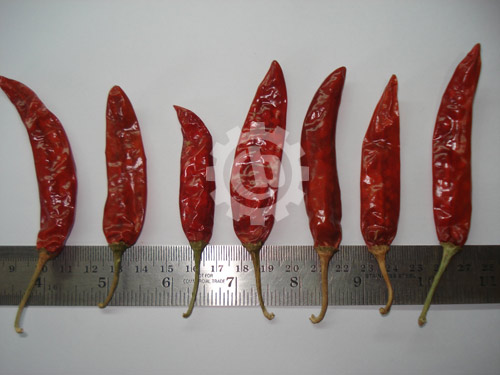 Chilli-Type-2-with-Scale