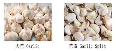 garlic-separator-1