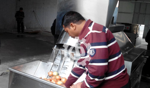 Onion Peeling and Root Cutting Machine Running In India